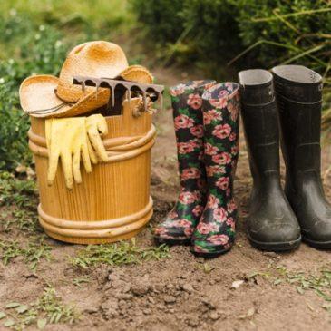 Les particuliers sont soulagés, ils peuvent désormais acheter graines et plants pour garnir les potagers, une source alimentaire fiable.