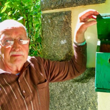 Même le nid primaire de la reine des frelons n'est pas de taille à donner le bourdon à Marcel.