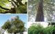 Les arbres remarquables sont des forces et des pépites de la nature.