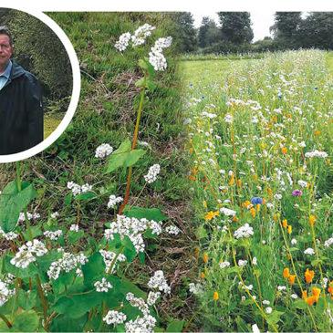 Cultiver du blé noir pour lutter contre les algues vertes: les explications de Claude Delahaye, producteur.