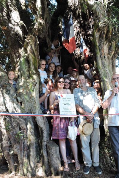 Il y a 3 ans, 58 personnes sont entrées dans le tronc creux de l'if d'Yvignac-la-Tour.